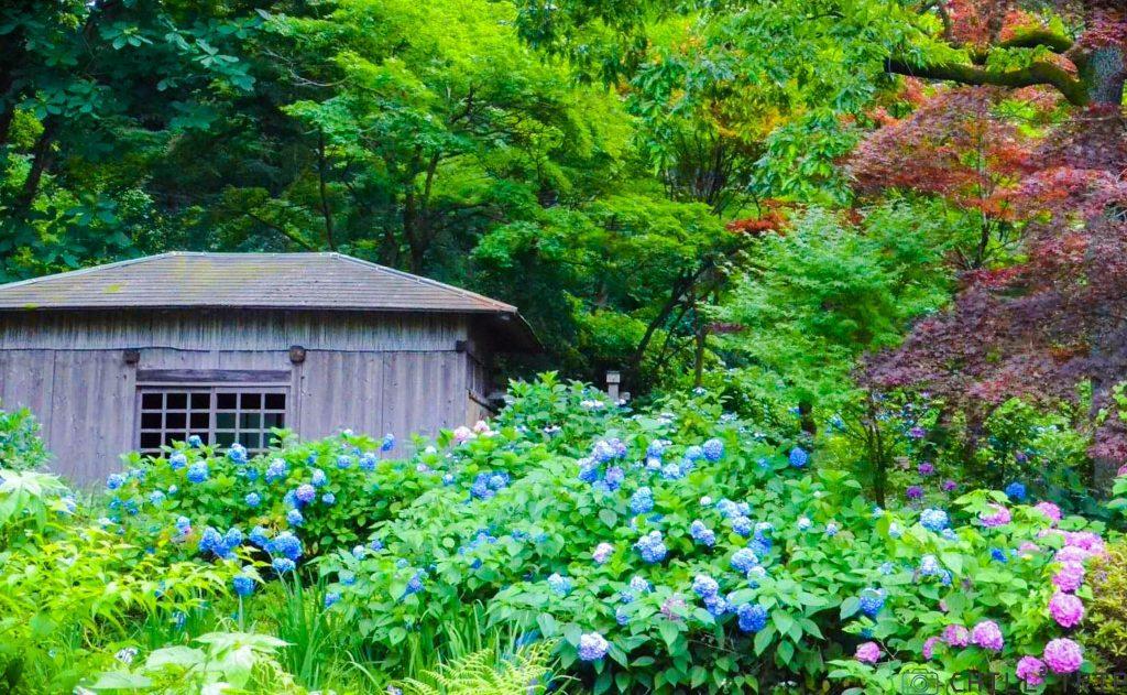 สวนสาธารณะยากูชิอิเกะ