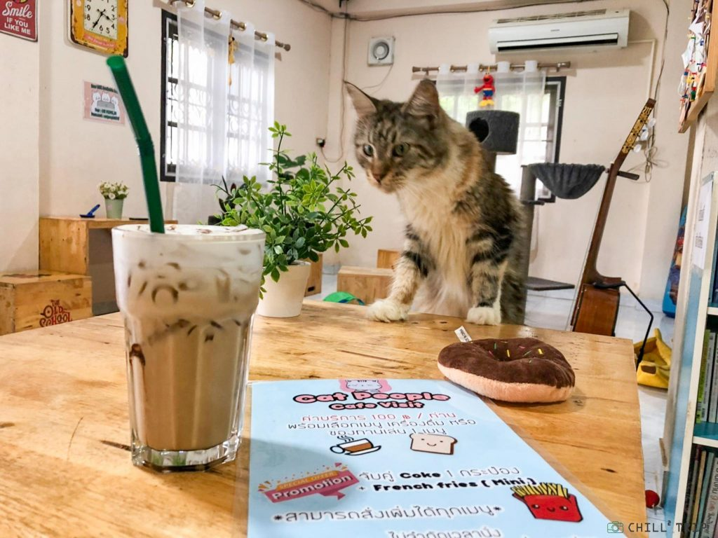 ร้าน cat people cafe