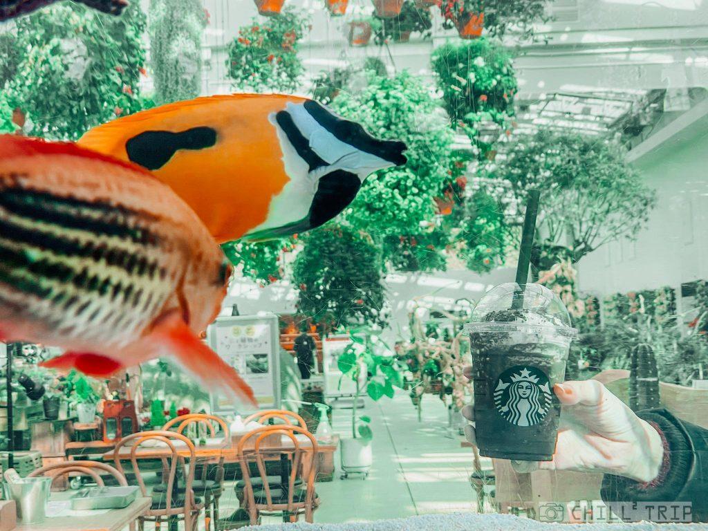 ร้าน Starbucks Hana Biyori