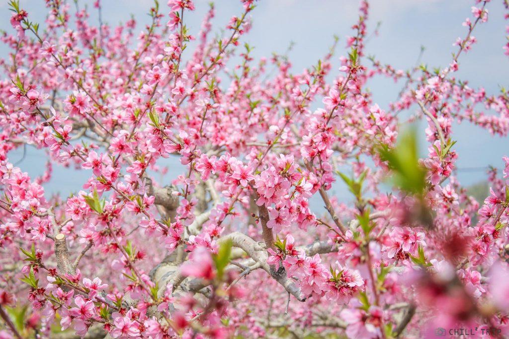 สวนโทเกนเคียว นาโนะฮานะ บาทาเกะ